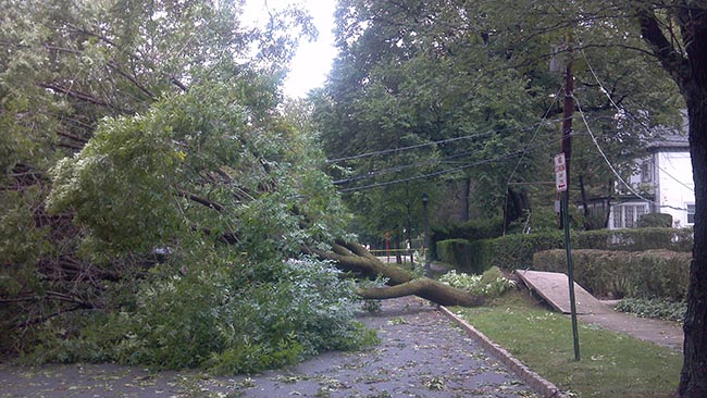 HURRICANE IRENE LAYS GREAT TREES TO REST
