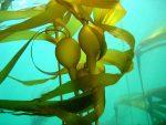 #Storgy published my short story, Popping Kelp